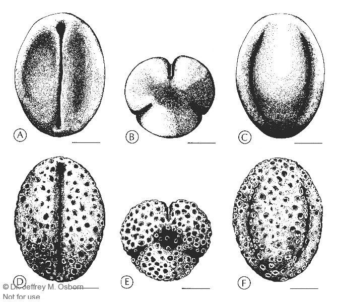Erdman-polen